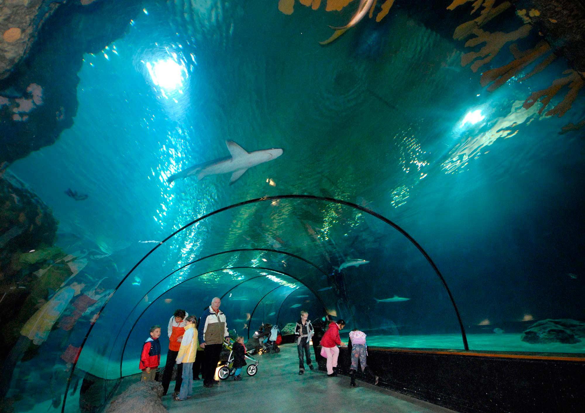 Mens en dier genieten van het oceanium dankzij C.A.R.S - YP Your Partner