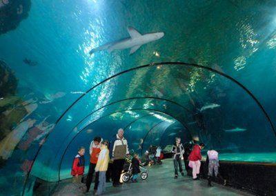 Mens en dier genieten van het oceanium
