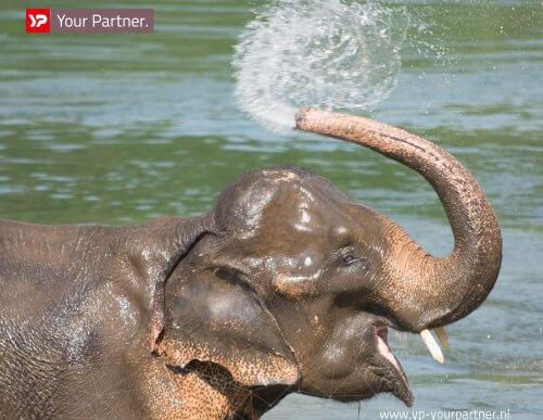 Schoon en veilig water in nieuw olifantenverblijf Artis door C
