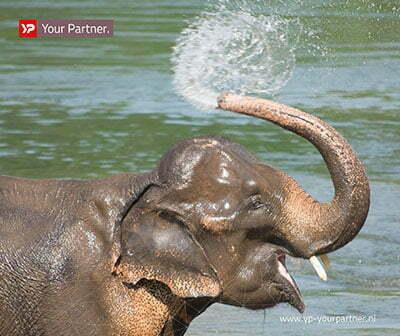 Groots waterspelen in nieuw olifantenverblijf Artis