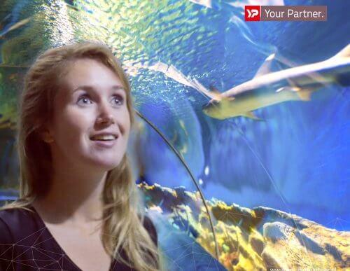 Kristalhelder water in het oceanium Diergaarde Blijdorp - Verhoeve Milieu en Water - YP Your Partner