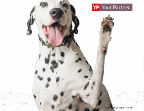 Dalmatier_YP Your Partner
